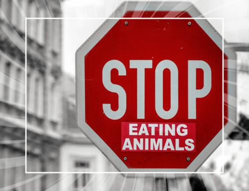 Ma come fai senza proteine animali?